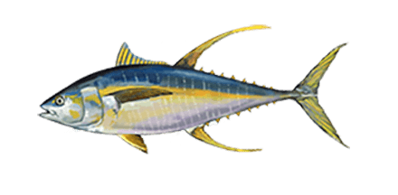 OBX fishing charters